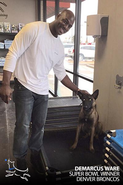 Dog Training Dallas Dog Obedience Training In Dallas