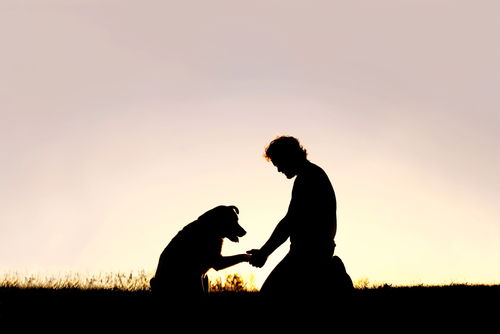 dog trainer in dallas
