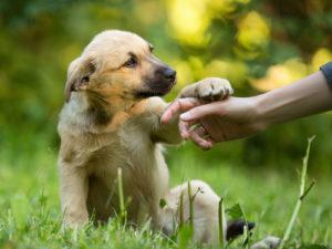 5 star puppy training