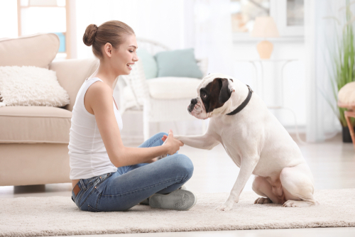 Dog Training School vs. In-Home Training: Making the Right Choice for Your Canine Friend